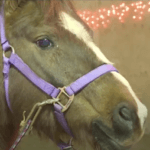 Horse with pink harness